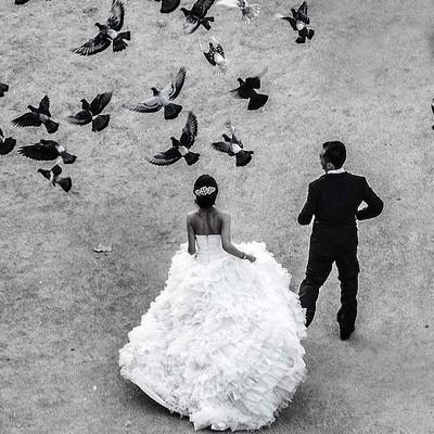 mariés oiseaux vus d'en haut vue plongée