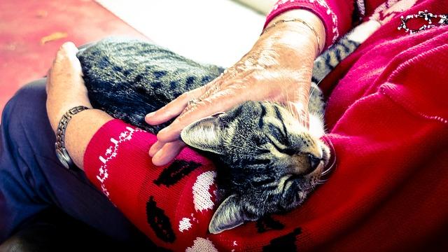Chat caliné par une personne âgée en EHPAD.