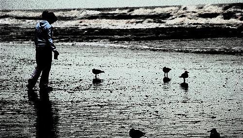 Plage sur laquelle une femme se promène au milieu d'oiseaux.
